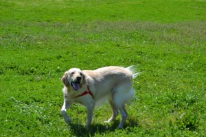 Roxy (2)