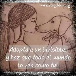 Campaña: Adopta un invisible!