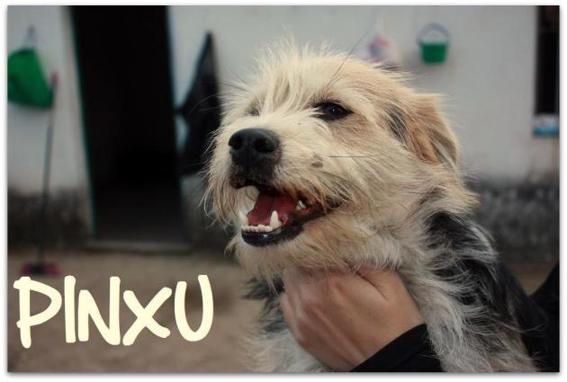 PINXU