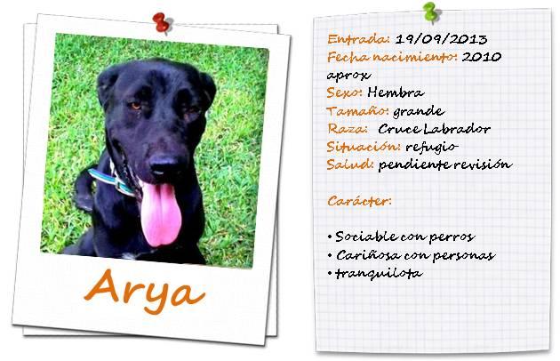 aryaficha