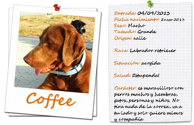 fichacoffee