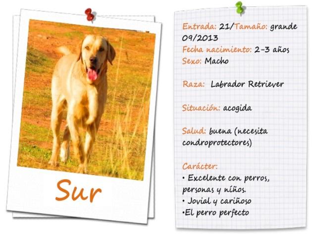 surfitxa2