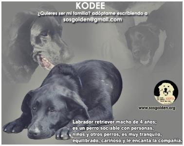 kodee_