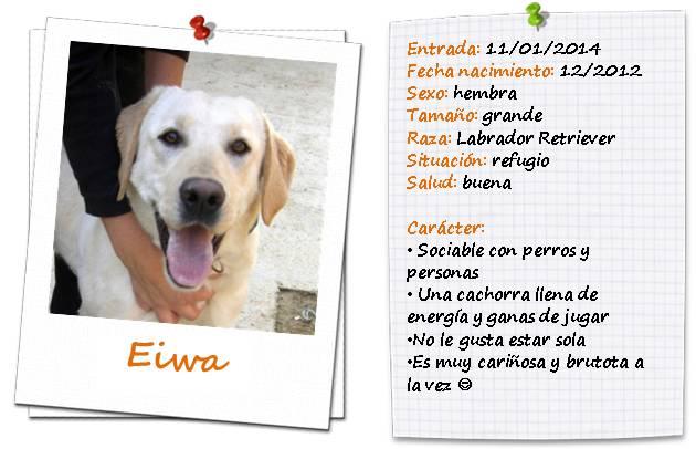 Eiwaficha