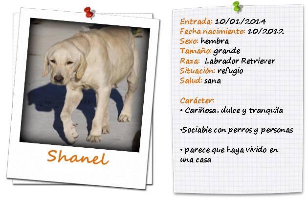 shanelficha