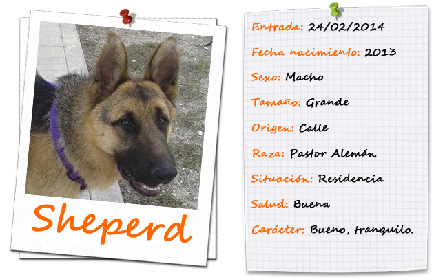 sheperdfitxa