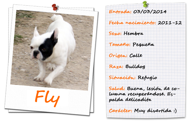 flyfitxa