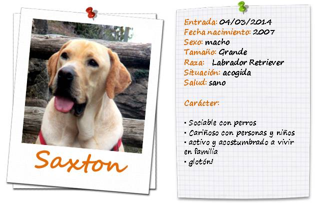 saxton