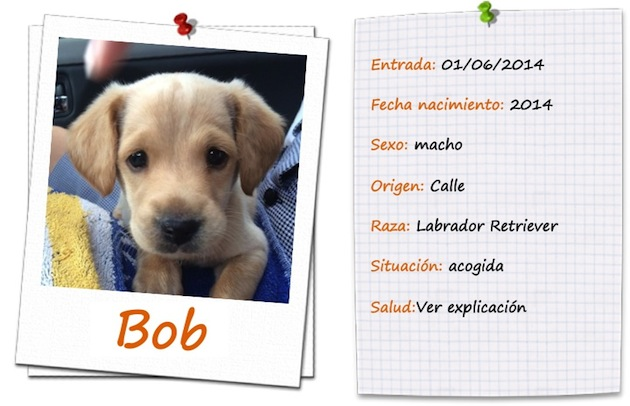 ficha bob