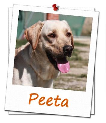 peeta-ficha