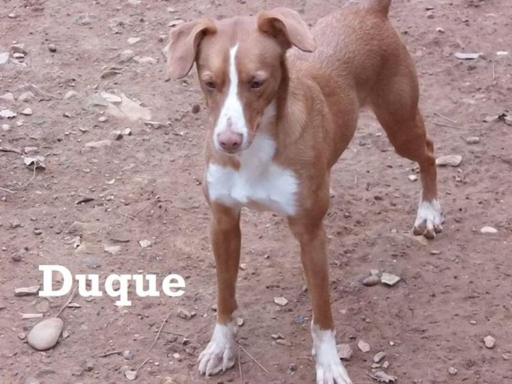 duque 2