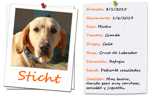 sticht_ficha
