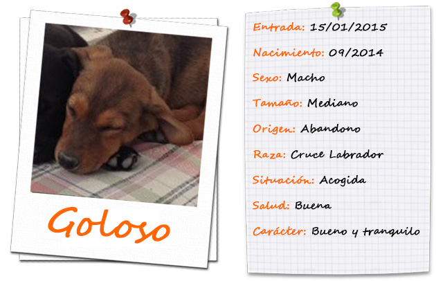 goloso_ficha