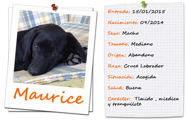 maurice_ficha