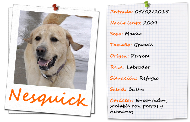 nesquick_ficha