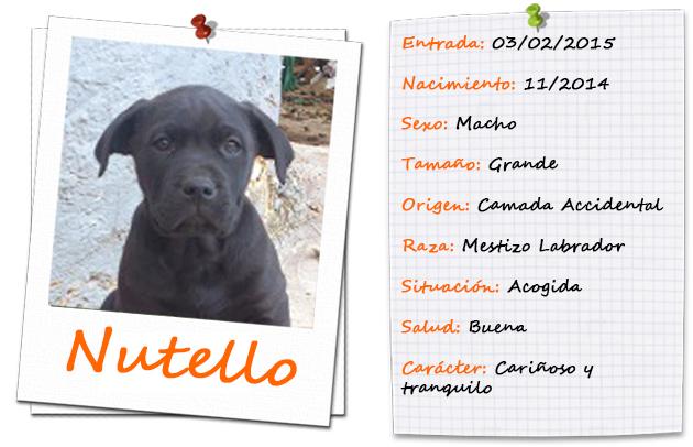 nutello_ficha