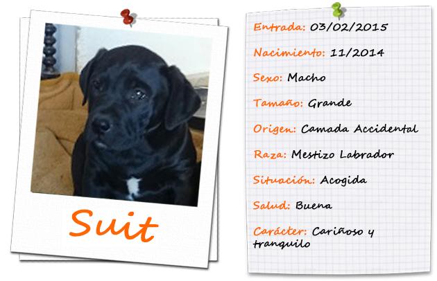 suit_ficha