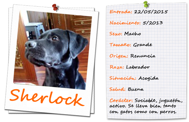 sherlock_ficha