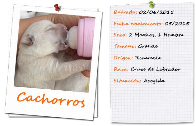 orinoco_yucon_amazona_ficha