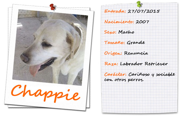 chappie_ficha