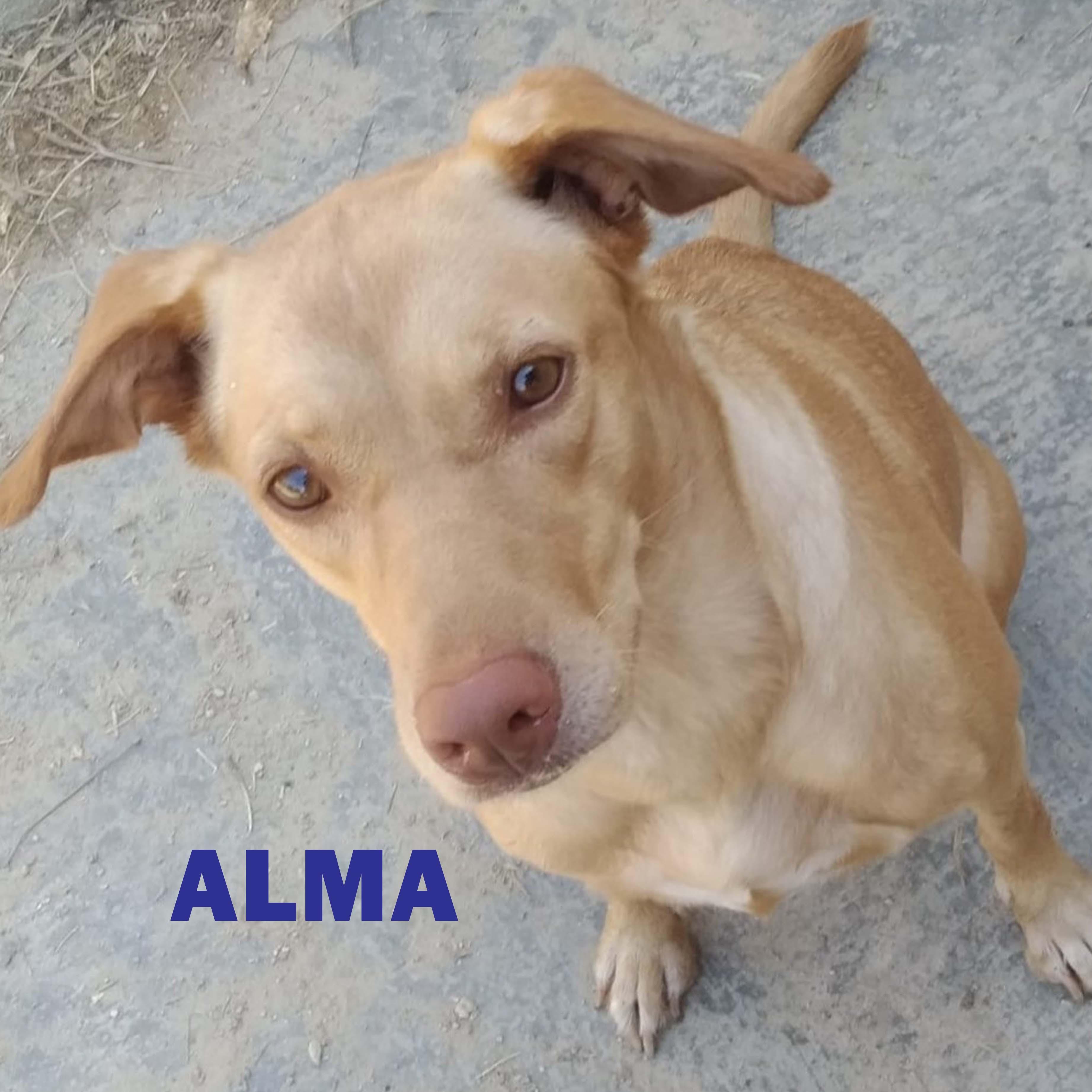 ALMA-INDIA 02 mosaico + nombre